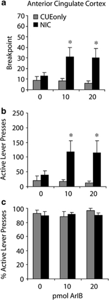 Antagonism of α7 nAChRs in the anterior cingulate cortex increases motivation to self-administer nicotine. Local anterior cingulate infusion of ArIB led to an increase in (a) breakpoints and (b) active lever pressing maintained by nicotine during a progressive ratio schedule of reinforcement (NIC; n=5). There was no effect of ArIB infusion on breakpoint or active lever pressing in rats reinforced with light+tone cues but no nicotine (CUEonly; n=5). (c) Response accuracy as measured by % active lever pressing was not affected by anterior cingulate infusion of ArIB in NIC or CUEonly rats. *Significantly different from NIC vehicle infusion (p<0.05).