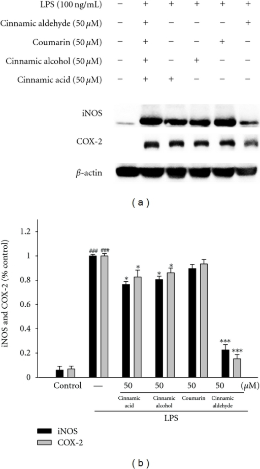 Inhibition of iNOS and COX-2 protein expression by Cinnamomum cassia constituents (cinnamic aldehyde, cinnamic alcohol, cinnamic acid, and coumarin) in LPS-stimulated RAW264.7 cells. Cells were incubated for 24 h with 100 ng/mL of LPS in the absence or the presence of samples (50 μM). Samples were added 1 h before incubation with LPS. Lysed cells were then prepared and subjected to western blotting using an antibody specific for iNOS and COX-2. β-actin was used as an internal control. (a) A representative western blot from two separate experiments is shown. (b) Relative iNOS and COX-2 protein levels were calculated with reference to an LPS-stimulated culture. ###compared with sample of control group. The data were presented as mean ± S.D. for three different experiments performed in triplicate. *P < 0.05 and ***P < 0.001 were compared with LPS-alone group.