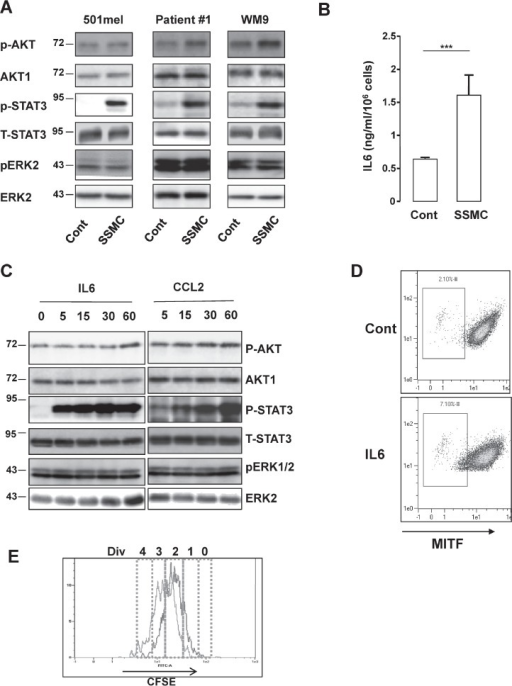 Activation of the STAT3 signaling pathway by the secretome of senescent melanoma cells