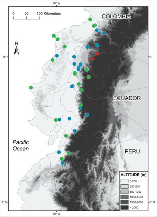 Distribution of Alopoglossus viridiceps sp. n. (triangles) and its sister species Alopoglossus festae (circles) in Ecuador. Locality data for Alopoglossus festae was taken both from the literature (blue circles; Almendáriz and Carr 2012; Köhler et al. 2012) and museum specimens (green circles; see Appendix).