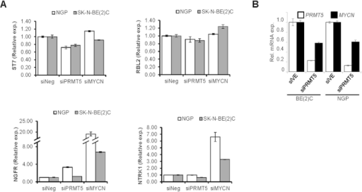 (A) Gene expression changes accompanying PRMT5 and MYCN knockdowns in NB cell-lines. (B) Quantitative reverse transcriptase PCR analysis of MYCN expression after PRMT5 knockdown.