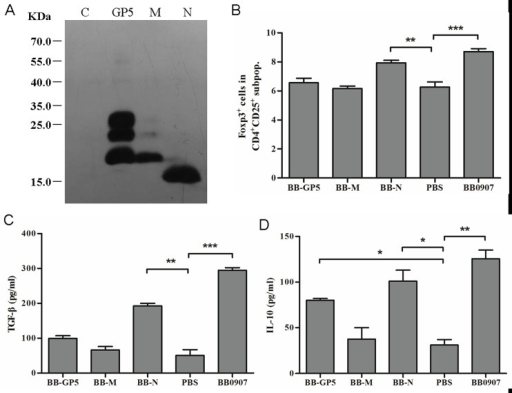 Role of baculovirus-expressed proteins GP5, M and N of HP-PRRSV in induction of Tregs proliferation.(A) Purified recombinant GP5, M and N protein expressed in baculovirus. (B) Percentage of Foxp3+ cells in the gated CD4+ CD25+ subpopulations of GP5, M and N. (C) Concentrations of TGF-β in supernatants of 3-day co-cultures. (D) Concentrations of IL-10 in supernatants of 3-day co-cultures. Data came from three independent experiments. Data analysis was done using one-way ANOVA and significant differences are shown (*P<0.05, **P<0.01 and ***P<0.001).