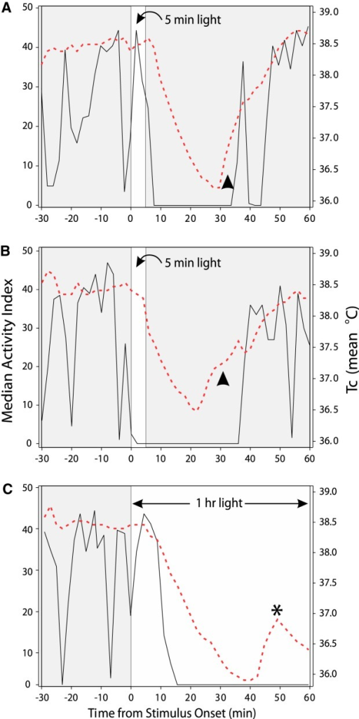 Simultaneously recorded patterns of wheel running (RPM; black solid lines) and core body temperature (red broken lines) in three individual mice housed under LD12:12 and, during the night the data were collected, exposed at ZT13 (time 0 is stimulus onset) to a 5 min light pulse (A, B, narrow white area) and a 1 h light pulse (C, broad white area). The arrowheads in A and B indicate portions of the records during which Tc has risen in advance of recovered locomotion. The asterisk in C identifies a rise in Tc and an aborted return to normal. Despite the increase in Tc, the simultaneously recorded wheel running does not correspondingly increase from its level of complete suppression during light exposure. After Figure 3 in Studholme et al. (2013).