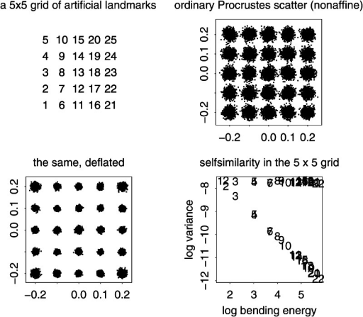 The isotropic offset Gaussian distribution for a  square grid of artificial landmarks. The standard deviation of the isotropic offset Gaussian process was set to 0.15 of the unit cell spacing. (upper left) The landmarks, numbered for use in Fig. 5. (upper right) The Procrustes shape distribution after the two-dimensional affine term has been projected out. (lower left) The bending-deflated version. (lower right) Confirmation of the self-scaling claim in the text: the relation between feature scale (specific bending energy) and feature variance is precisely loglinear with a slope of  for the 22 partial warps of this artificial configuration after the deflation. Upper line: original variances by partial warp, slope  Lower line: variances after deflation, slope  to be confirmed by the explicit analyses for squares in Fig. 5