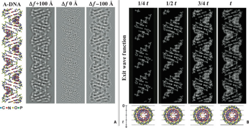 A-DNA simulations.(A) Atomic model of A-DNA and corresponding HRTEM image simulations calculated using three defocus (Δf) values. (B) The A-DNA filament was subdivided into four plane slices of ¼t = 6.0 Å parallel to the helix axis. The black arrow indicates the electron beam propagation direction perpendicular to the planes. The corresponding electron exit wave functions at ¼t, ½t, ¾t, and t show phase variations directly correlated to specimen potential and atom position. Amplitude changes are negligible due to weak phase object approximation. In both (A) and (B), the lattice fringes form angles of 18° with respect to the helix axis, and the periodicity of minor and major grooves is in accordance with the double-helix atomic model.