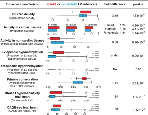 Enhancers overlapping QT/QRS loci differ in functional characteristics from all enhancers.Several functional characteristics were compared between enhancers overlapping QT/QRS loci (red) and non-GWAS left ventricle enhancers (blue). Fold change represents fold change between median values for the two groups, and p-values were calculated using the Mann-Whitney U test. See Materials and methods for comparison methodology between GWAS QT/QRS enhancers and non-GWAS enhancers for each functional or epigenomic feature. For primate conservation, LV enhancers (blue) were size-matched (+/-1 kb) to GWAS enhancers to control for skewed enrichments driven by larger GWAS enhancer size.DOI:http://dx.doi.org/10.7554/eLife.10557.007