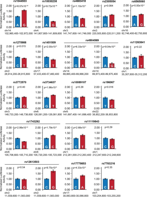 Sub-threshold SNP alleles affect enhancer activity.For each sub-threshold locus, enhancers carrying one of two haplotypes were cloned upstream of a minimal promoter and firefly luciferase reporter gene. Blue: enhancer carrying reference allele; red: enhancer carrying alternate allele. Error bars represent standard error of the mean.DOI:http://dx.doi.org/10.7554/eLife.10557.014