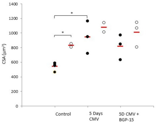 Individual rat single diaphragm muscle fiber cross sectional area (CSA) measured at fixed sarcomere length in control animals (individual rats: young n = 4 and old n = 2) compared with age-matched animals exposed to CMV for 5 days without (individual rats: young n = 3 and old n = 2) and with BGP-15 (individual rats: young n = 3 and old n = 3). Values are averages of individual data from the different animals and the red line indicates the average for each group. (Filled circles, young; open circles, old; red line, group average). Significance level, *p < 0.05.