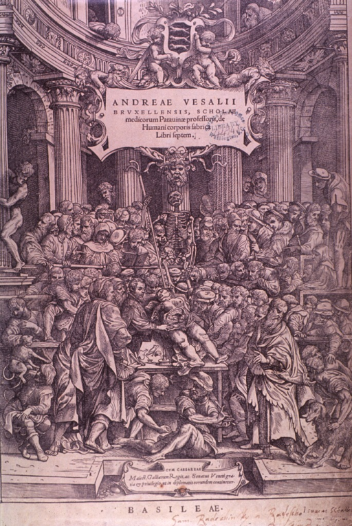 <p>Vesalius performs dissection in a crowded anatomical theatre.</p>