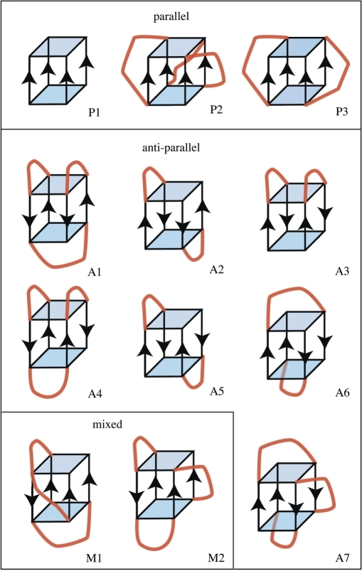 Schematic depictions of quadruplex folding patterns. The patterns are labeled P for parallel, A for anti-parallel and M for mixed which is also known as 3+1. The quartets are shown in blue and the loops in red. Only two quartets are shown for illustration purposes.