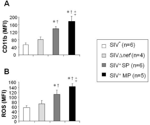 PMN functions during chronic infection of rhesus macaques with the pathogenic SIVmac251 strain or the attenuated SIVΔnef strain. Basal CD11b expression on the PMN surface (A) and basal ROS production (B) were studied in whole blood samples. Results are expressed as Mean Fluorescence Intensity (MFI). Data are reported as means ± SEM. Comparisons were based on ANOVA and Tukey's posthoc test, using Prism 3.0 software. * Significantly different from healthy controls (SIV- group) (p < 0.05); † Significantly different from SIVΔnef macaques (p < 0.05); †† Significantly different from SIV+ SP (p < 0.05).