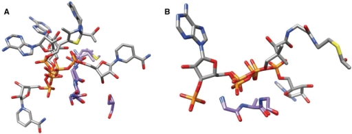 Two examples of PbMs used by the method. Each motif is represented by the residues forming the motif, that belong to different structures, and their corresponding bound ligands. Carbon atoms of the binding residues are in purple while those belonging to the ligand are in white, all the other atoms are colored by type (phosphorus in orange, oxygen in red, nitrogen in light blue, sulphur in yellow). (A) PbM (id 598). The motif is [V,M]-G-[N,A,S]-S where the final serine residue is present in only two of the three protein structures with different folds that share the motif. The three structures belong to a inositol-1′-phosphate synthase from M. tubercolosis (PDB code 1GR0), to an adenylyltransferase from Methanobacterium thermoautotrophicum (PDB code 1M8F) and to the Klebsiella pneumoniae acetolactate synthase (PDB code 1OZH). (B) PbM (id 1075). Two glycines and an alanine interact with the phosphate groups forming a G-A-G motif in two protein structures with different folds. The two structures belong to a Thermus thermophilus kinase (PDB code 1V1B) and to a histone acetyltransferase from Saccharomyces cerevisiae (PDB code 1QSM).