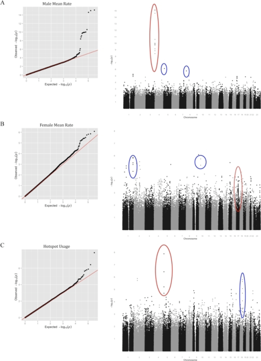 Results of the meta-analysis of FHS and AGRE for three recombination phenotypes.Each row consists of a Q-Q plot of observed against expected p-values (left panel) and a Manhattan plot showing the observed p-values across the genome (right panel). A. For the male mean rate. In the Manhattan plot, SNPs at RNF212 are circled in red and new candidate associations discussed in the main text are circled in blue. B. For the female mean rate. In the Manhattan plot, SNPs at or near Inversion 17q21.3 are circled in red and new candidate associations discussed in the main text are circled in blue. C. For the historical hotspot usage in the two sexes. SNPs near PRDM9 are circled in red and a new candidate association discussed in the text is circled in blue.
