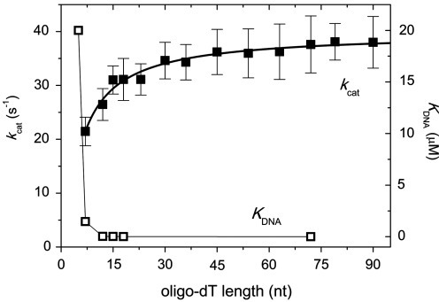 DNA length-dependent ATPase kinetics indicate active ssDNA translocation by BLM1077. Shown are steady-state ATPase kcat (filled square) and KDNA (open square, ssDNA concentration required for half-maximal activation) values of 20 nM BLM1077 in the presence of oligo-dT substrates of different length at 25°C. kcat values were fitted (solid line) with the equation described previously for BLM1290 (41). Determined mechanistic parameters are listed in Table 1. The break point in KDNA values indicated a binding site size (b) of ∼10 nt, which is detectably smaller than that previously described for BLM1290 (∼14 nt) (41). See Supplementary Figure S3 for comparison of ATPase profiles of BLM1077 with those of BLM1290 and BLMFL in the presence of DNA substrates of different structure. Error bars represent SEM in all figures.