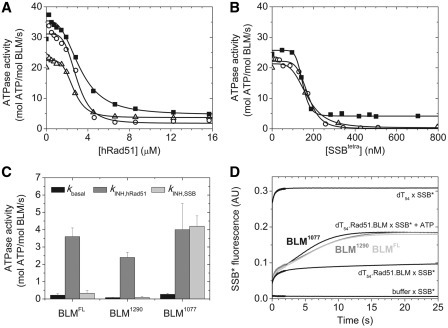 Nucleoprotein filament clearance by BLM constructs. (A) Steady-state ATPase activities of 20 nM BLM1077 (filled squqre), BLM1290 (open circle) and BLMFL (open triangle) measured at 25°C in the presence of 100 nM dT54 and at different hRad51 concentrations. Hill-equation () was used for data fitting in which k0 and kINH are BLM ATPase activities in the absence of hRad51 and in the presence of saturating hRad51 concentration, respectively; cINH is hRad51 concentration; K is the Michaelis constant and n is the cooperativity factor. Obtained values of K and n (not shown) were similar for all three constructs. (B) Steady-state BLM ATPase activities measured as in (A) except using SSB instead of hRad51. SSB tetramer concentrations are indicated. (C) Steady-state ATPase activities of BLM constructs in the absence of DNA (kbasal, black) and in the presence of saturating concentrations of hRad51 and SSB (kINH,hRad51, grey and kINH,SSB, light grey, respectively, cf. panels A and B). Note that kINH,hRad51 was markedly elevated compared to kbasal in all three BLM constructs, indicating hRad51 filament clearance activity. Conversely, kINH,SSB was practically identical to kbasal in BLMFL and BLM1290, but markedly elevated in BLM1077, indicating that only the latter construct is able to clear SSB from ssDNA. (D) Kinetics of hRad51 nucleoprotein filament clearance by BLM constructs, as monitored by MDCC-SSB fluorescence. dT54 (150 nM) was incubated with 2.8 µM hRad51 for 30 min on ice. BLM constructs were then added at a concentration of 200 nM, and samples were incubated for additional 10 min on ice. Traces labelled BLM1077 (black), BLM1290 (grey) and BLMFL (light grey) were recorded upon rapidly mixing dT54.hRad51.BLM premixtures with 1 µM MDDC-SSB (marked as SSB*) plus 2 mM ATP to monitor hRad51 clearance by BLM. The panel also shows control traces recorded upon mixing MDCC-SSB with buffer alone, MDCC-SSB with free dT54 (in the absence of hRad51 and BLM), and dT54.Rad51.BLM premixtures with MDCC-SSB in the absence of ATP. (In the latter case, traces were very similar in the case of all BLM constructs and also when BLM was omitted.) Traces were corrected for MDCC-SSB fluorescence levels at the start of the reactions. The extent of active hRad51 clearance by BLM, as calculated from the final steady-state MDCC-SSB fluorescence levels, was 41, 41 and 39% in the case of BLM1077, BLM1290 and BLMFL, respectively.