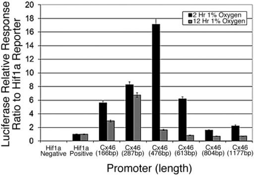 Figure 2. The promoter of human Connexin 46 is transiently responsive to 1% oxygen in human lens cells. Various fragments 5′ to the predicted transcription start site of the human Cx46 promoter were cloned into a promoterless luciferase reporter vector and tested for responsiveness to 1% oxygen in human lens epithelial cells. The varying activity correlated with the length of the promoter indicates the presence of regulatory elements encoded within the promoter. The promoter did not respond to hypoxia in N2A cells in the same assay (unpublished data). Error bars represent standard error of the mean (n = 6).
