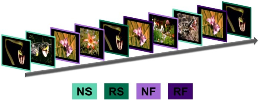 We presented novel and repeated images of snakes and flowers while measuring BOLD activity.(a) We presented images sequentially for 8 seconds each in an event related design. All participants saw 5 presentations of novel snake (NS) and 5 presentations of novel flower (NF) images indicated by the light green and light purple outlines, respectively. In addition all saw 5 repetitions of one snake (RS) and one flower (RF) image, shown in dark green and dark purple respectively.