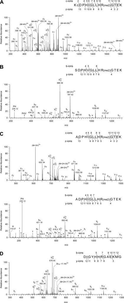Characterization of the symmetrical dimethylation of arginine residues of the 49-kDa subunits of complexes I from humans, P. pastoris, and P. denitrificans.A–C show mass spectrometric analyses of the human, P. pastoris, and P. denitrificans proteins, and D shows that the modification is not found in the equivalent position in the E. coli protein. In the insets, the fragment ions observed in the spectra are mapped onto the amino acid sequence of the peptides. In the inset in A, c is carbamidomethylcysteine. In B and C, neutral losses of fragments of 31 (monomethylamine) and 70 (dimethylcarbodiimide) are labeled * and ∧, respectively. They confirm the modification as symmetrical dimethylation of Arg-106 and Arg-65, respectively; ● denotes ions arising by internal fragmentation. A, spectrum of fragments produced by ETD from a quadruply charged ion (m/z 447.99) from the tryptic peptide corresponding to residues 75–89 of the human subunit. The z4-z5 and c10-c11 ions demonstrate dimethylation of residue Arg-85. A background 447.12 m/z singly charged ion is observed as a contaminant of the precursor (M+4H)4+ ion in the ETD spectrum. B, spectrum of fragments produced by HCD from a doubly charged ion (m/z 787.42) from the tryptic peptide corresponding to residues 97–110 of the P. pastoris subunit. The ions y4 and y6 define the sequence His-105-dimethyl-Arg-106. C, upper panel, spectrum of fragments produced by ETD of a triply charged ion (m/z 524.63); lower panel, spectrum of fragments produced by HCD of a doubly charged ion (m/z 786.44) of the tryptic peptide corresponding to residues 56–69 of the P. denitrificans subunit. The z4-z5, c9-c10, and y4-y5 ions demonstrate dimethylation of residue Arg-65. D, spectrum of fragments produced by CID from a doubly charged ion (m/z 735.85) from a peptide corresponding to residues 243–255 of the E. coli NuoCD subunit. The series of fragment ions identifies the peptide and excludes modification of residue Arg-249.