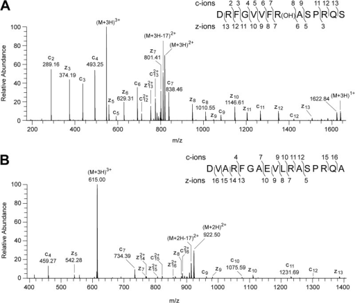 Characterization of the hydroxylation of residue Arg-73 of the PSST subunit of human complex I and the unmodified residue in the E. coli NuoB subunit.A, ETD fragmentation spectrum of a triply charged ion, m/z 546.62, generated by cleavage of the human PSST protein with Asp-N. The ions z6-z7 and c7-c8 show that the +16 Da modification is associated with residue Arg-73. B, spectrum of fragments produced by ETD from a triply charged ion (m/z 615.00) from a peptide corresponding to residues 77–93 of the E. coli NuoB subunit. The series of fragment ions identifies the peptide and excludes modification of residue Arg-87. In the insets, the fragment ions are mapped onto the amino acid sequence.