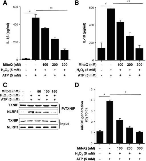 Effect of MitoQ on human THP-1 cells. (A) IL-1 beta and (B) IL-18 release in response to H2O2 or ATP were analyzed by ELISA. Results are expressed as mean ±SE. n=5,*P<0.001. (C) The interaction between TXNIP and NLRP3 was examined by co-IP and western blotting analysis. (D) mtROS production in THP-1 cells. Cells were differentiated for 24 hours with 100 nM phorbol 12-myristate 13-acetate. Results are expressed as mean ±SE. *P<0.001.