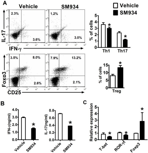 Effects of SM934 on the polarization of CD4+ T cells in EAE mice.Splenocytes from immunized mice treated with vehicle or SM934 were isolated at the peak of disease (day 18 p.i.) and analyzed. (A) The percentage of Th1, Th17 and Treg cells in the CD4+ gate were analyzed by flow cytometry, values in the bar graphs are the mean ± SEM (n = 4). (B) Splenocytes were re-stimulated with IL-12 (20 ng/ml) or IL-23 (20 ng/ml) for 72 hours, and supernatants were collected to measure IFN-γ and IL-17 levels, respectively. (C) RNA from splenocytes was analyzed by real-time PCR for expression of T-bet, RORγt and Foxp3. Results were expressed as mean ± SEM. *, p<0.05 compared with vehicle control. Three independent experiments were performed with similar results.