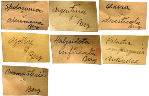 Labels handwritten by Berg in pencil. These labels are pinned on type specimens.