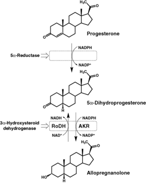 Synthesis Of Allopregnanolone From Progesterone A 5 Ce B1 Reductase Enzyme Produces 5 Ce B1 Dihydroprogesterone From