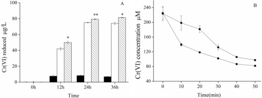 (A) Comparison of Cr(VI)-reducing ability of cultured HepG2 (□) and HepG2-YieF (▧) cells at different time points. (■) indicates cell-free control. * p < 0.05, ** p < 0.01; (B) Absolute concentration of remaining Cr(VI) in HepG2 (■) and HepG2-YieF (●) cell crude extract at different timepoints; (C) The lessened amount of Cr(VI) in HepG2 (▢) and HepG2-YieF (▨) cell crude extract by calculation. Mean and SEs were obtained from three separate measurements of a representative experiment. Experiments were replicated at least twice. Error bars were in some cases smaller than the size of the symbol. * p < 0.05, ** p < 0.01.
