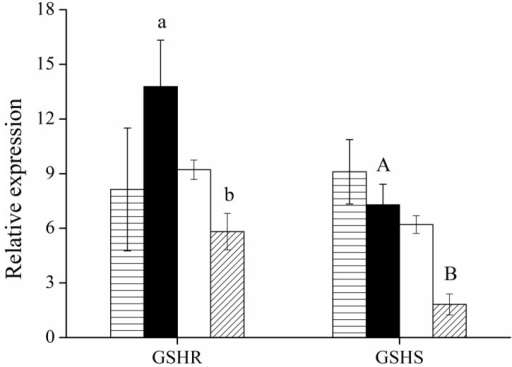 Relative mRNA expressions of glutathione reductase and glutathione synthetase were compared between transfectants and non-transfectants. Bars represent HepG2 without (▤) or with (■) Cr(VI) treatment, and HepG2-YieF without (▢) or with (▨) Cr(VI) treatment. The values are the mean of four individual samples. Data were normalized to the expression of the housekeeping gene β-actin. Differences between bar a and b and between A and B are significant (p < 0.05).