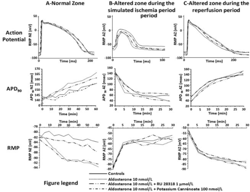 Effects of aldosterone and aldosterone + blockers (RU 28318 and potassium canrenoate) on APD90 and RMP, in the NZ (panel A) and in the AZ during both simulated-ischemia (panel B) and reperfusion periods (panel C).For sake of clarity and in order not to overload the figure, APD90 and RMP values are expressed in mean (and not in mean ± SEM). Concerning SEM and statistical significance, please refer to Tables 1 and 2.
