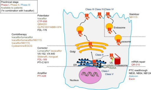 Overview of the most advance CFTR modulators in preclinical and clinical studies, with regard to the class of CFTR mutations and the primary defect of the corresponding mutant protein.Abbreviations: CFTR, cystic fibrosis transmembrane conductance regulator; PTC, premature termination codon; EGCG, epigallocatechin gallate; ER, endoplasmic reticulum; Ub, ubiquitin; mRNA, messenger RNA.