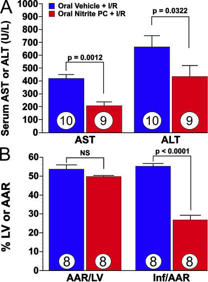 Hepatic and myocardial I/R injury are attenuated in mice after oral nitrite therapy. (A) The effects of oral nitrite preconditioning (PC) on the severity of hepatic I/R injury (measured as aspartate aminotransferase [AST] and ALT) in mice. Mice received nitrite via oral gavage at 24 h before 45 min of hepatic ischemia and 5 h of reperfusion. Numbers for each group are shown inside the bars. (B) Bar graph of oral nitrite preconditioning and myocardial I/R injury in mice. Mice received oral nitrite at 24 h before 30 min of ischemia and 24 h of reperfusion. The myocardial area-at-risk (AAR) per total left ventricle (LV) was not significantly different between study groups (NS). The myocardial infarct size (Inf) per area-at-risk was significantly (P < 0.0001) reduced in the oral nitrite preconditioning group when compared with the oral vehicle group. Eight animals were investigated in each group.