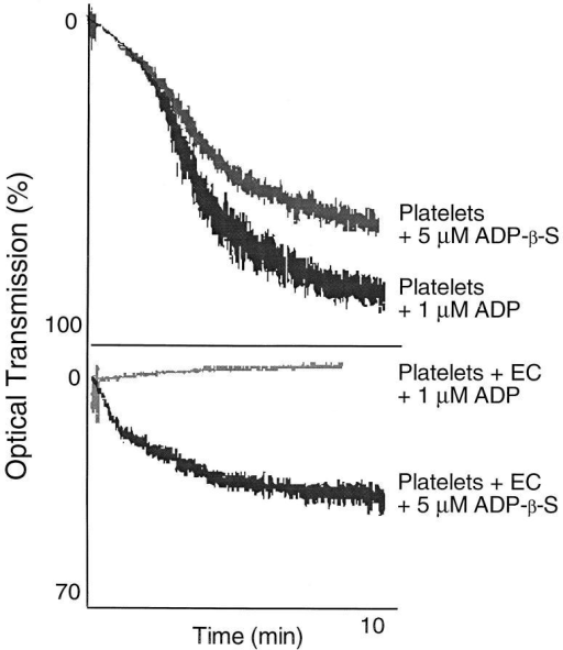 Effect of pEC on platelet aggregation induced by ADP and  ADP-β-S (an ADP analog resistant to ATPDase activity). Platelets underwent comparable aggregation responses after stimulation with 1 μM ADP  and 5 μM ADP-β-S. Addition of pEC abrogated platelet responses to  ADP alone, but had minimal effects on ADP-β-S stimulated platelet aggregation. These data indicate a functional ATPDase associated with EC  is responsible, at least in part, for the inhibitory effects on platelet aggregation in vitro.