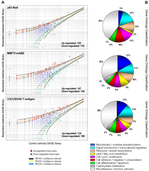 Deregulated transcripts in mammary gland by systemic treatment with bexarotene in the three transgenic mice mammary cancer models.A. Scatter-plot representation of differentially expressed genes between bexarotene treated mice and vehicle control SAGE libraries (p < 0.05). B. Gene ontology (GO) classification of bexarotene induced differentially expressed transcripts on mammary gland from the different transgenic models. Relative representation of the deregulated transcripts with specific GO term annotations related to biological processes or molecular function.