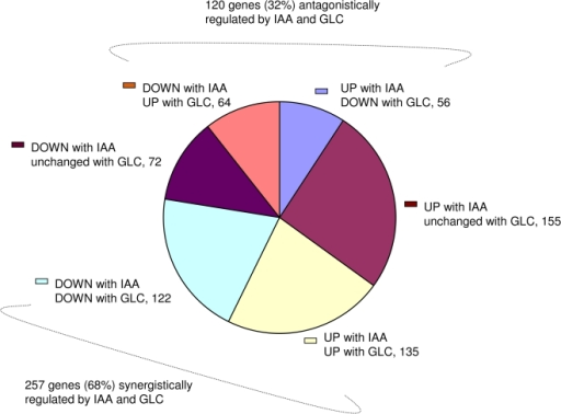 IAA up or down-regulated genes also affected 2 fold or more up or down by glucose treatment alone.Effect of glucose on IAA induced or repressed genes. IAA can altogether up or down-regulate 604 genes in glucose free medium (cut-off 2 fold) of which glucose alone can independently affect 377 (62%) genes (cut-off 2 fold).