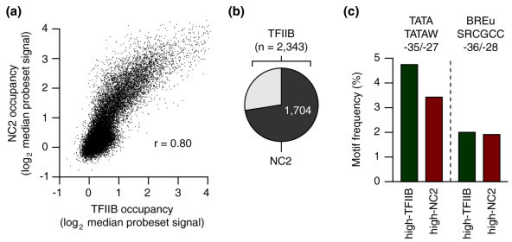 TFIIB versus NC2 binding to human promoters. (a) Genome-wide correlation of TFIIB and NC2 binding levels on promoter regions. r, Pearson's correlation. (b) Pie chart showing the overlap of high-occupancy promoters (upper 10th percentile) recovered in TFIIB and NC2 ChIP-chip samples. (c) Comparison of the frequencies of TATA and BREu consensus sequences in high-TFIIB versus high-NC2 promoters.