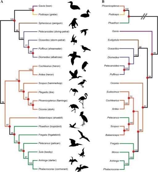recent estimates of higherlevel waterbird phylogeny ba