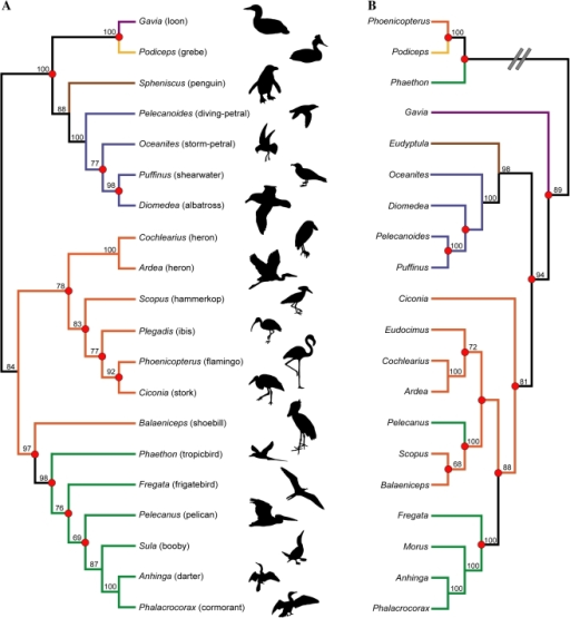 Recent estimates of higher-level waterbird phylogeny ba ...