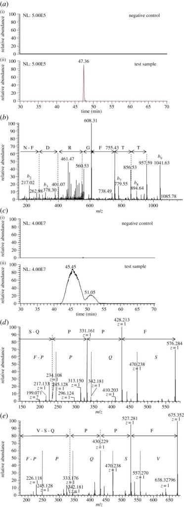 Identification of AliB-like ORF 1 ligand SETTFGRDFN and AliB-like ORF 2 ligands FPPQSV and FPPQS. (a) AliB-like ORF 1 ligand: extracted ion chromatogram of the doubly charged peptide ion with mass-to-charge ratio (m/z) of 587.26201 (retention time (RT) 47.36 min) with mass tolerance of ±1 ppm from the negative control (i) and positive sample (ii), intensity scale set at the same level. (b) Representative fragment mass spectrum acquired in the linear trap quadrupole (LTQ) iontrap and sequence interpretation by Phenyx software. Only the y-ion series (fragments appearing to extend from the carboxyl terminus) is annotated. (Individual peaks corresponding to the initial two amino acids S and E at the amino terminus are not visible in the y-ion series and are therefore not annotated but SE is the mass difference between the last detectable y-ion at 957.59 and the singly charged molecular ion of 1173.517.) (c) AliB-like ORF 2 ligands: extracted ion chromatogram of the singly charged peptide ions with mass-to-charge ratio (m/z) of 575.27934 (RT = 45.45 min, corresponding to sequence FPPQS) and 674.34844 (RT = 51.05 min, sequence FPPQSV) with mass tolerance of ±2 ppm from the negative control (i) and positive sample (ii), intensity scale set at the same level. A representative fragment mass spectrum acquired in Fourier transformation (FT) mode, resolution of 7500, of peptides 575 (d) and 674 (e) is shown. Manual interpretation of the fragment peaks is shown using italic letters for the b-ion (fragments appearing to extend from the amino terminus) and non-italic letters for the y-ion series. Confirmation of correct interpretation was achieved with fragment spectra of synthetic peptides (electronic supplementary material, figure S3).
