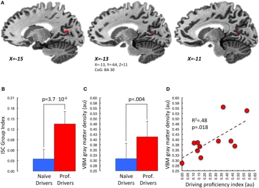 "Correlation between mean VBM-values in retrosplenial cortex and driving proficiency. In (A) is represented in red the portion of BA30 lying in the left parieto-occipital sulcus. This area appears to be the one, among those showing functional and structural group differences, characterized by a significant correlation between gray matter density and ""driving proficiency index"" (p < 0.05 small volume TFCE corrected). Task-related Inter-Subject Correlation values and gray matter density measures of both groups extracted from this region of interest are represented in (B,C) respectively. Panel (D) depicts the correlation between cortical gray matter density and the performance level achieved in the professional drivers group (red dots). [au]: arbitrary units."