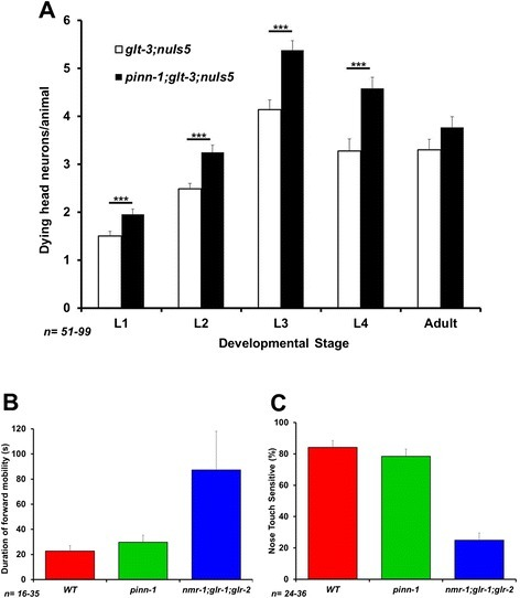 pinn-1 is an important suppressor of nematode excitotoxicity that does not affect basic synaptic strength. A)pinn-1 mutation enhances excitotoxicity throughout development. **p < 0.01 B & C)pinn-1 does not affect the duration of spontaneous forward mobility or nose touch sensitivity, two sensitive measures of Glu synaptic strength.