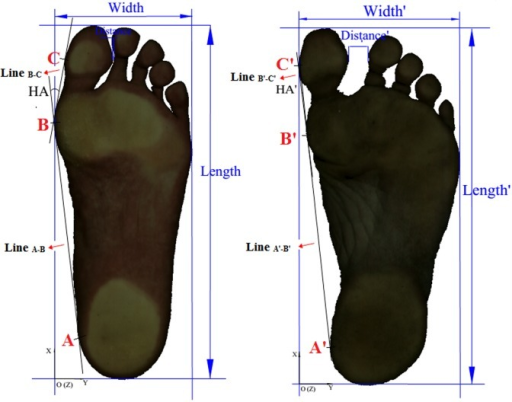 2D foot print image of habitually shod (left) and unshod (right) runners.