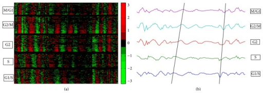 Results of using priori knowledge of cell-cycle marks in human Hela cell data. (a) Heat map displays the searching results. (b) Plotting the mean values of each group, in which black lines indicate the trends of peaks.