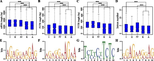 "Gene transcript features and sequence motifs contributing to different mRNA decay patterns. a-d A display of mRNA length, 5′ UTR length, 3' UTR length and number of introns for different gene types. ""I"", ""II"", ""IV"", ""R"" and ""A"" represent type-I, −II, −IV, randomly selected genes and all genes, respectively. ""***"" indicates statistically significant difference at P-value < 0.001 (Student's wilcox-test). e-h Enriched motifs (E-value < 0.001) in the 5' UTRs of type-I (e), type-II (f and g) and type-IV (h) genes"