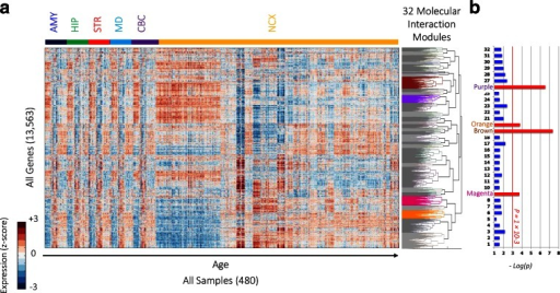 Transcriptome-wide molecular interaction network. a A heatmap of the expression of 13,563 genes (rows) across all 480 samples (columns). Samples are ordered first by brain region (color-code at the top) and then by age. The dendrogram to the right shows the clustering of all the genes into 32 modules. Modules with significant enrichment (p < 10−3) of genes from the ASD list are colored while other modules are shown in gray. b Enrichment of ASD candidate genes in each of the modules showing high significance in the magenta, brown, orange, and purple modules (represented by −log10(p), FDR-corrected)