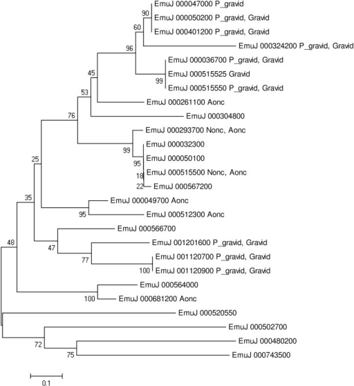 Phylogenetic analyses of diagnostic antigen gp50 amino acid sequences.The neighbor-joining tree was constructed by MEGA 6.0 (www.megasoftware.net); bootstrap values were obtained from 1,000 replicates. Nonc: RPKM>100 at stages of non-activated oncosphere; Aonc: RPKM>100 at stages of activated oncosphere; P_gravid: FPKM>100 at stage of pre-gravid [23]; Gravid: FPKM>100 at stage of gravid [23].