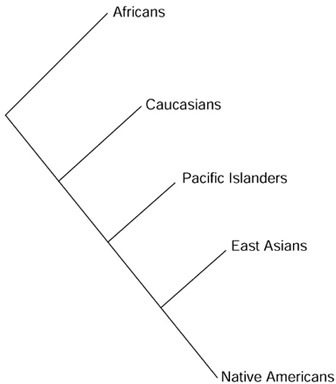 what are the five races of the world