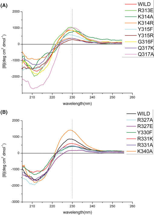 CD spectra. CD spectra of wild-type AtWRKY1-C and the mutant proteins on β2 strand. The different proteins were distinguished from each other by colors. (A) CD spectra of wild-type AtWRKY1-C and the mutant proteins on β3 and β4 strands.