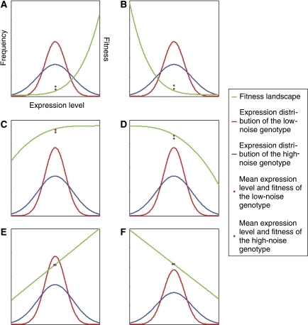 Fitness landscape affects the relative fitness of high-noise and low-noise genotypes. In each panel, the green curve shows f(x), the fitness of the cell with the expression level of gene X equal to x. The blue and red curves show the frequency distributions of the expression levels (x) of the high-noise and low-noise genotypes, respectively. The blue and red dots are the mean fitness of the high-noise and low-noise genotypes, respectively. When f(x) is convex, the mean fitness of the high-noise genotype is greater than that of the low-noise genotype, no matter whether the optimal expression level is higher (A) or lower (B) than the mean expression levels of the two genotypes. When f(x) is concave, the fitness of the high-noise genotype is smaller than that of the low-noise genotype, no matter whether the optimal expression level is higher (C) or lower (D) than the mean expression levels of the two genotypes. When f(x) is linear, the fitness of the high-noise genotype equals that of the low-noise genotype, no matter whether the optimal expression level is higher (E) or lower (F) than the mean expression levels of the two genotypes.