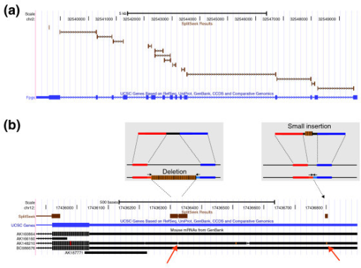SplitSeek results viewed in the UCSC genome browser. (a) Predicted splice junctions in the gene Fpgs. (b) The two grey boxes give a schematic view of how deletions and insertions are detected. The genome browser image below shows the SplitSeek results in the last exon and 3' UTR of the Nol10 gene on chromosome 12. Three events are predicted, a splice junction (to the left), a deletion (in the middle,) and an insertion (to the right). The predicted insertion and deletion are both supported by the mRNA AK148210, as indicated by the orange arrows at the bottom.